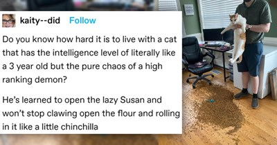 tumblr thread about a cat causing mischief | thumbnail includes one picture of a man holding a cat up above a pile of cat food and one tumblr post 'Font - kaity--did Follow Do you know how hard it is to live with a cat that has the intelligence level of literally like a 3 year old but the pure chaos of a high ranking demon? He's learned to open the lazy Susan and won't stop clawing open the flour and rolling in it like a little chinchilla'