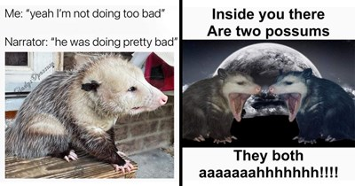 Funny and edgy possum memes, depressing memes, dank memes, lol