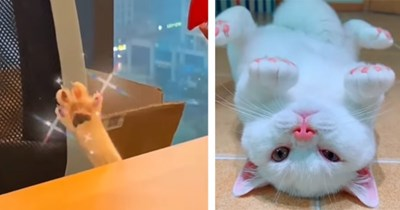 5 silly cat videos from instagram | thumbnail left cat's paw reaching up from behind table, thumbnail right white cat with pink toes, nose, and ears laying upside down on floor