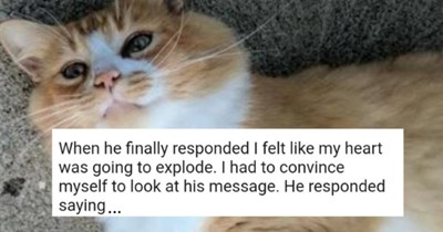 wholesome story from reddit about a man finding love with the help of his cat | thumbnail includes a photo of the cat, Prince, and the text, 'When he finally responded I felt like my heart was going to explode. I had to convince myself to look at his message. He responded saying...'