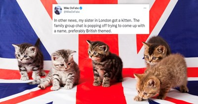 collection of funny fake british names for pets   thumbnail includes a photo of kittens with a union jack and text saying 'other news, my sister London got kitten family group chat is popping off trying come up with name, preferably British themed.'