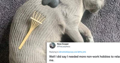 list of cute photos and funny tweets about the zen garden cat   thumbnail includes photo of the zen garden cat and text 'Well I did say I needed more non-work hobbies to relax me'