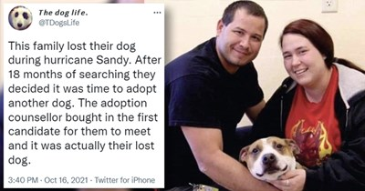 tweets about unexpected and strange adoption stories | thumbnail includes a picture of a man and a woman holding a dog and one tweet 'Smile - The dog life. @TDogsLife ... This family lost their dog during hurricane Sandy. After 18 months of searching they decided it was time to adopt another dog. The adoption counsellor bought in the first candidate for them to meet and it was actually their lost dog. 3:40 PM Oct 16, 2021 - Twitter for iPhone 2,520 Retweets 418 Quote Tweets 29.1K Likes'