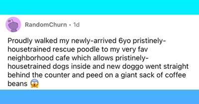 """18 text based images embarrassing dog incidents 