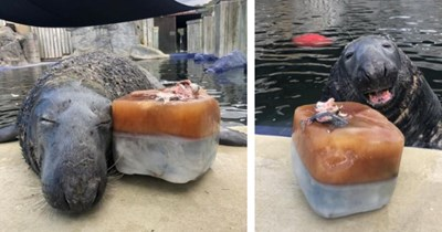 13 images of seal with ice fish cake and facebook comment responses   thumbnail left and right seal with ice fish cake in water