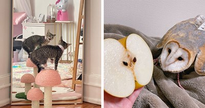 this week's collection of pictures that are worth more than 1000 words   thumbnail includes two pictures including an owl looking at an apple with suspicion and a kitten screaming at its reflection in the mirror