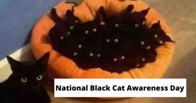 collection of black cat appreciation memes and posts   thumbnail includes text saying 'National Black Cat Awareness Day'
