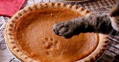 a funny list of thanksgiving dos and donts when you have a pet