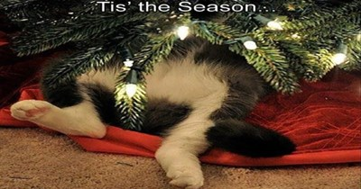 12 days of christmas gifs Cats funny - 4263685