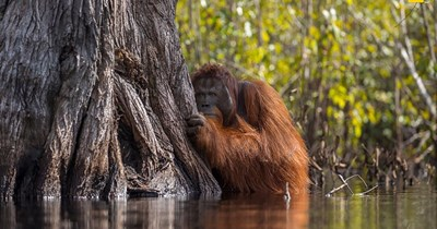 national geographic photos wildlife contest animals - 4264709