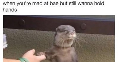 bae relationships Memes animals - 4817157