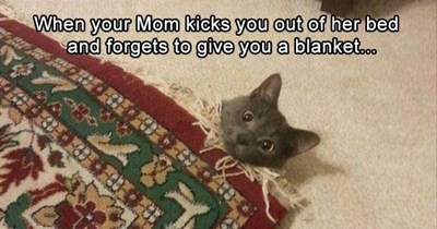 Memes Caturday Cats - 4817925