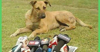 TV interview anchors animals - 4835845