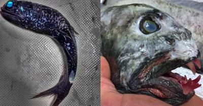 sea scary russia fishing spooky Damn Nature U Scary deep fish - 4876293
