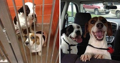 Before and after photos of adopted dogs.
