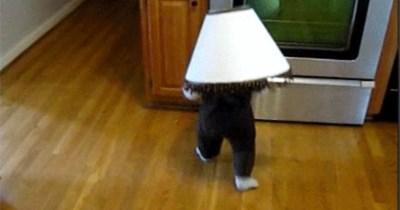 gifs baby gifs cheezcake funny - 5345541
