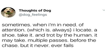 dogs cute dogs twitter cute funny dogs tweets funny tweets funny - 5358341