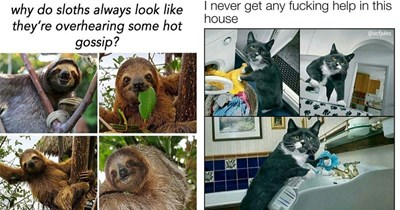 dog memes Memes animal memes funny animals cat memes - 5400581