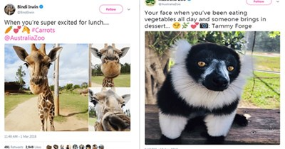 twitter steve irwin australia zoo tweets daughter animals - 5409029