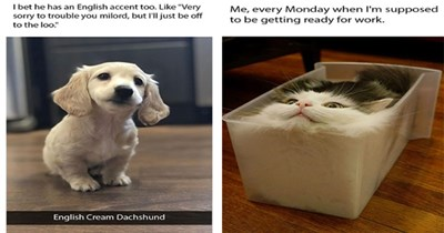 funny memes Memes animal memes animals monday - 5689093