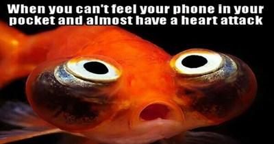 goldfish goldfish memes funny memes cute Memes funny - 5703685