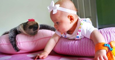 aww baby photos friends cute sloth - 5964037