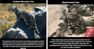 lolcats facts interesting cute funny cats species interesting facts Cats funny cat species true facts fun facts - 5966341