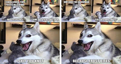 funny puns dogs puns funny dogs - 5983749