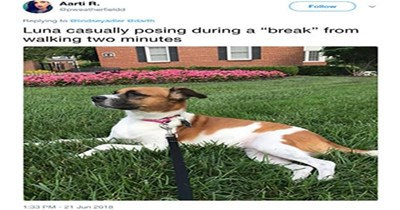 dogs twitter dogs posing random cute funny dogs lol tweets funny - 6029061