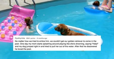 a cover photo for a list from ask reddit- the photo shows a golden retriever in the pool on a float