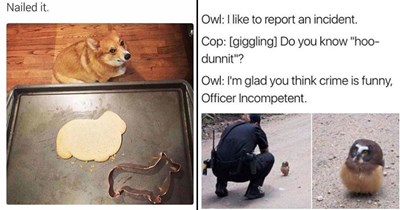 dog memes cute animals birb memes Adorable Animal doggo memes bunny memes animal memes funny animals animals funny cats cat memes wolves wild animals zoo - 6527749