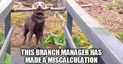 dogs Memes branches sticks - 6536453