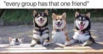 dog memes funny memes Memes shiba inu - 6749445