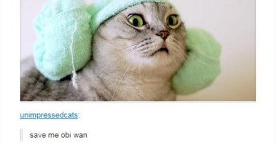 tumblr cute posts Cats funny - 6782213