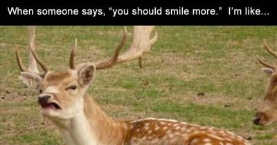 funny memes Memes animal memes animals - 6981125