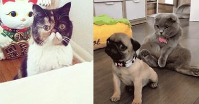 animal photos photos funny photos animals - 7128581