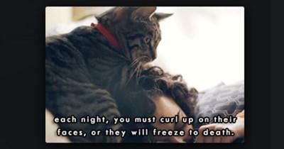 cat gifs guide Funny GIFs gifs human Cats - 7161349