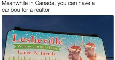 Canada Meanwhile tweets funny tweets animal tweets - 7316741