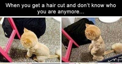 dog memes funny memes animal memes cat memes - 7359237