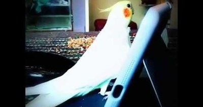 birds Game of Thrones Theme Song - 74048769