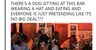 bar drinking dogs dog tweets funny dogs funny tweets - 7543813