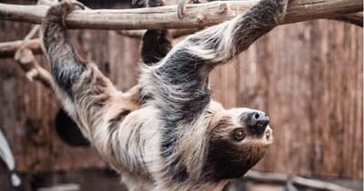 retirment retirment hom aging UK sloth - 7581189