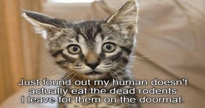 funny cat memes lolcats funny memes cute cats lol funny cats Cats funny cat memes - 7735557