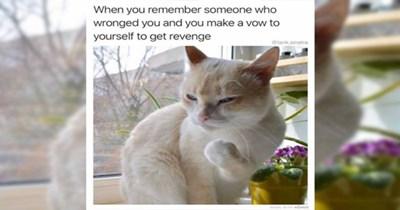 funny memes Memes animal memes funny animals animals - 7762181