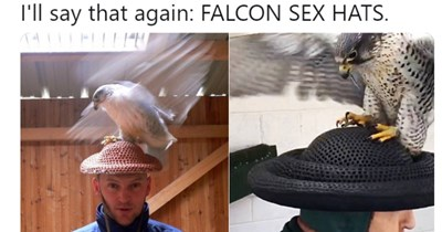 twitter falcon hat breeding - 7778565