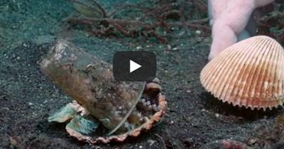 youtube sea life octopus plastic home Video - 788998