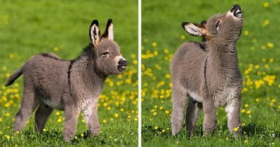 aww baby donkey adorable cute donkeys - 7954949
