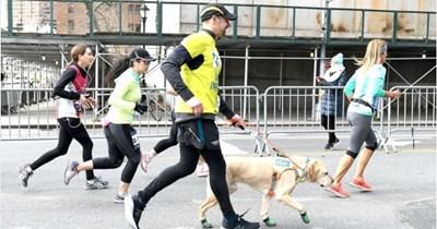 heartwarming blind guide dog - 7956741