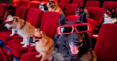 cool dogs plato texas cute wine k9 cinema - 8420613