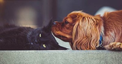 dog sniffing cat's ear